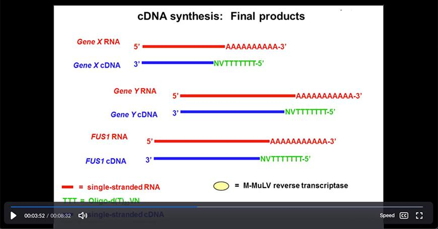 video still of Vanessa Cheung explaining cDNA synthesis